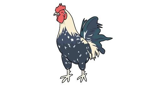 Q&A「地鶏って普通の鶏と何が違うの?」