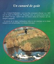 ビュルゴー家のシャラン鴨